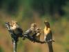 birds_main