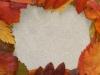 frame_of_leaves