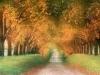 strada_nel_bosco