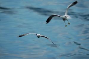 Comune-di-Tiriolo-Bustreo-Aurora-Abbiategrasso-MI-Liberi-di-volare