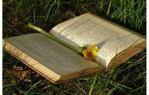 festa-del-libro-tascabile-vimercate